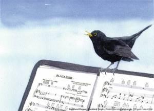 Des blackbird
